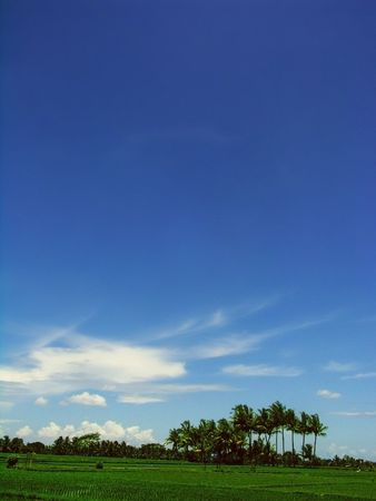 Blue Sky on Ricefield photo