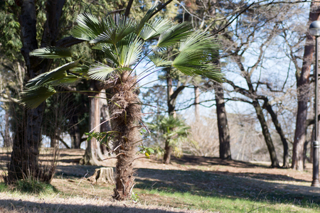 A cycads growing in a Japanese park