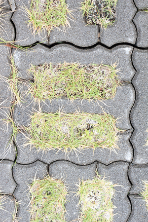 Lawn grows between concrete tiles on ground 写真素材