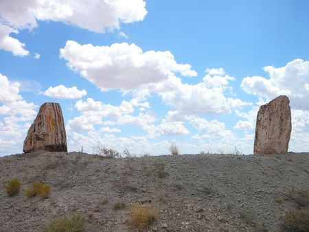 Petrified Wood in the Sky