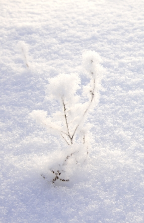 Winter scene. Snow covered twig over snow background. Stock Photo - 17588187