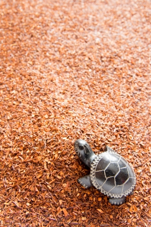 Rooibos tea background with turtle close up. Selective focus. Stock Photo