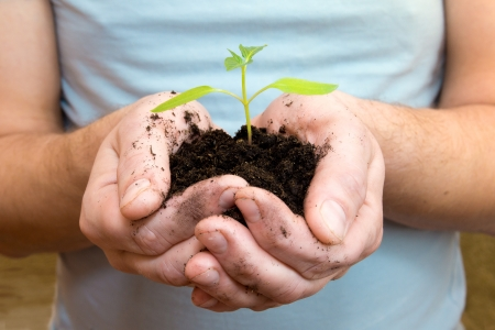 Young sprouting plant in male hands, sunlight. Beginning and care concept. photo