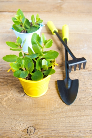 Seedlings of young plants and garden tools on a wooden surface (background). Gardening and spring concept photo