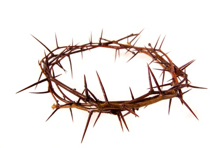 graves: Crown of thorns isolated on white background, copy spase. Christian concept of suffering. Stock Photo