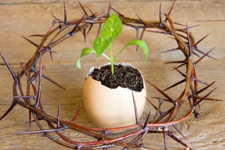 Young green plant grow in eggshell with  crown of thorns over wooden background. Development, way out of crisis or problems, new life, hope, birth or revival concept.
