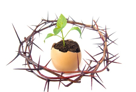 Young green plant grow in eggshell with crown of thorns isolated on white background. Development, way out of crisis or problems, new life, hope, birth or revival concept. photo