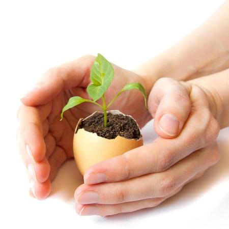 Planta verde joven creciendo en la cáscara del huevo y hembra manos aisladas en fondo blanco. Desarrollo, la atención, la esperanza, la ecología, la nueva vida, el nacimiento o renacimiento concepto.