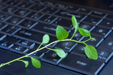 Green plant on keyboard. Insight, new ideas, ecology, environment in office concept. photo