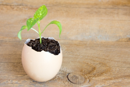 Young green plant grow in eggshell over wooden background. Development, new life, birth or revival concept, copy space horizontal Stock Photo