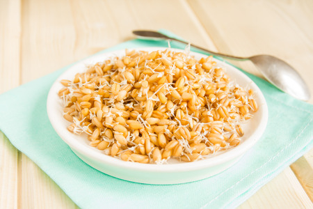 sprouted: Sprouted wheat seeds on plate and wooden background, close up, selective focus