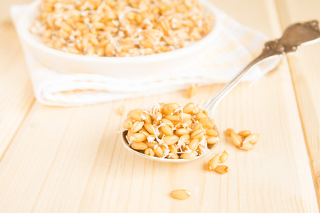 sprouted: Sprouted wheat seeds on spoon and wooden background, close up, selective focus