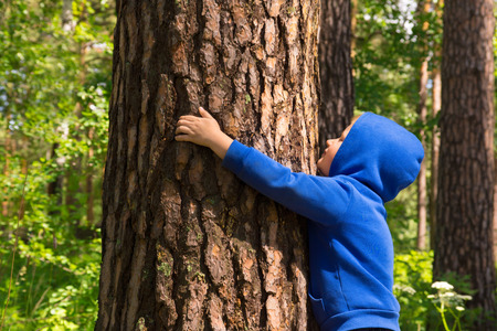 strong boy: Child (boy, hands) hugging pine, playing and having fun outdoor in summer forest (park). Environmental protection concept.