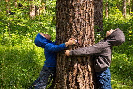 fun: Children (boys, hands) hugging pine, playing and having fun outdoor in summer forest (park). Environmental protection concept.