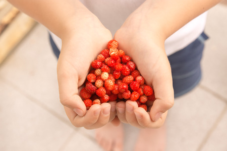 wild organic tasty strawberries in hands in shape of heart