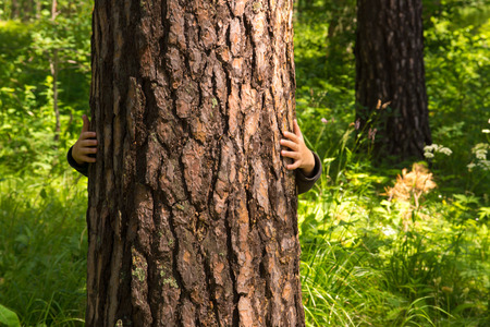 trunks: Child (boy, hands) hugging pine, hiding, playing and having fun outdoor in summer forest (park). Environmental protection concept. Stock Photo