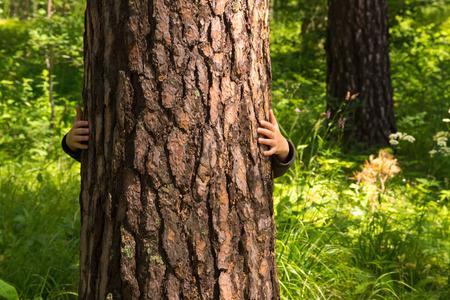 pino: Niño (niño, manos) abrazando pino, ocultando, jugar y divertirse al aire libre en el bosque de verano (parque). Concepto de protección del medio ambiente.