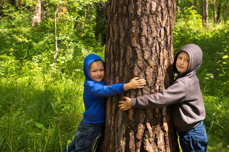 Children (boys, hands) hugging pine, playing and having fun outdoor in summer forest (park). Environmental protection concept. Reklamní fotografie - 43132723