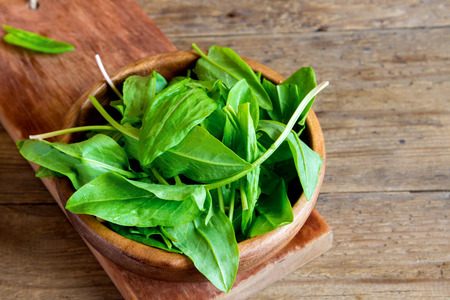 sorrel: fresh organic sorrel leaves in wooden bowl