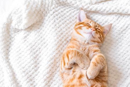 Chat roux dormant sur une couverture blanche douce, concept de maison confortable et de détente, joli chat rouge ou roux. Banque d'images