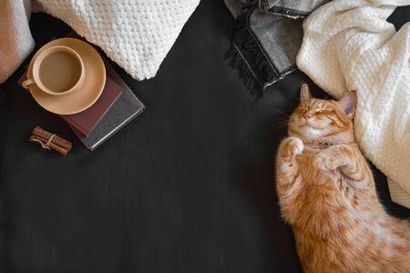 Ingwerkatze schläft auf einem gemütlichen schwarzen Sofa. Heimliche Gemütlichkeit mit Katze, weichem Plaid, Kaffee und Büchern. Gemütliches Zuhause und Hygge-Konzept, Kopierraum.