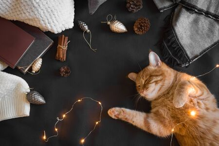 Winter cozy composition with ginger cat. Seasonal Christmas coziness with cat, soft plaid, coffee and book. Cozy home and hygge concept, copy space.