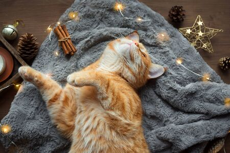 Ginger cat and Christmas garland, winter cozy composition. Seasonal Christmas coziness with cat, soft plaid, garland and pine cones. Cozy home and hygge concept. Фото со стока