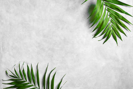 Palm Leaves on gray concrete background, top view, copy space. Green plant foliage trendy layout.
