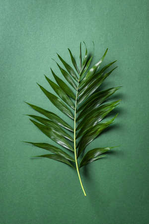 Palm Leaf on green background, top view. Green exotic plant foliage trendy creative layout.