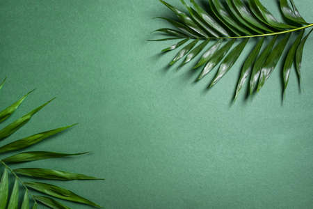 Palm Leaves on green background, top view, copy space. Green exotic plant foliage trendy creative layout.