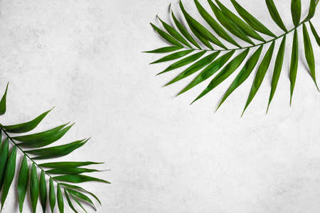Palm Leaves on white stone background, top view, copy space. Green plant foliage trendy layout.