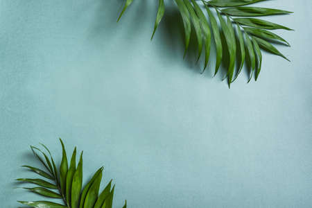 Palm Leaves on blue background, top view, copy space. Green exotic plant foliage trendy creative layout.