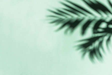 Palm Leaves Shadows on green wall, abstract background, copy space. Tropical leaves silhouette.