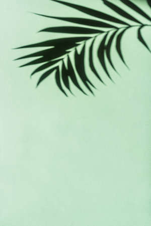 Palm Leaf Shadow on green wall, abstract background, copy space. Tropical leaves silhouette.