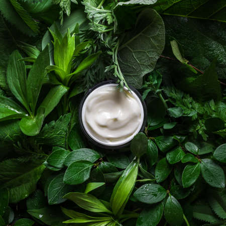 Jar of cosmetic cream on green leaves as background. Natural eco beauty and organic skin care concept.