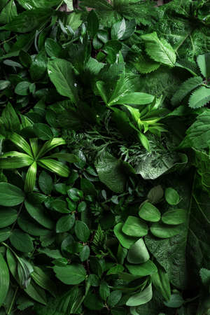 Green leaves as background, creative layout. Nature, eco, environment concept.
