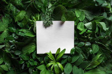 Creative layout made of green leaves with paper blank card. Nature, eco, environment concept.