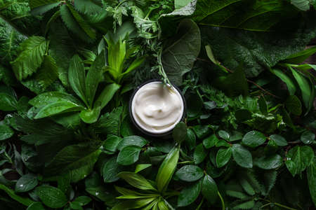Jar of cosmetic cream on green leaves as background, top view. Natural eco beauty and organic skin care concept.