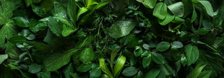 Variuos green leaves as background, creative layout. Nature, eco, environment concept.