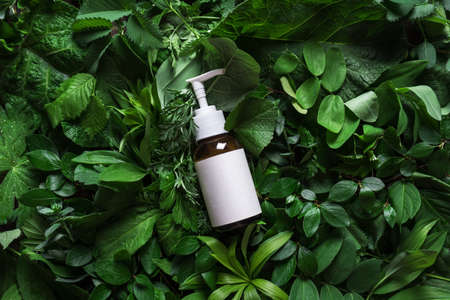 Cosmetic skin care product (body lotion, hair shampoo, face creme) on green leaves as background, top view. Natural eco beauty and organic skin care concept. 免版税图像