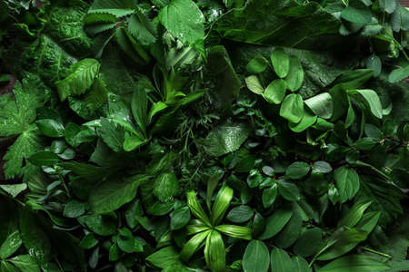 Various green leaves as background, creative layout. Nature, eco, environment concept. 免版税图像