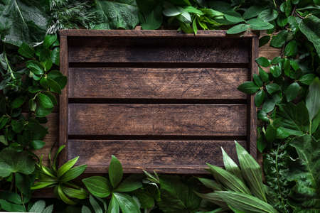 Green leaves and rustic wooden background, creative layout, copy space. Nature, eco, environment concept.