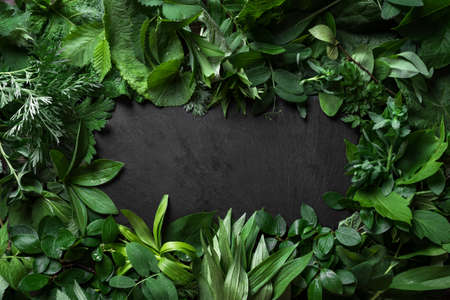 Green leaves and black slate background, creative layout, copy space. Nature, eco, environment concept.