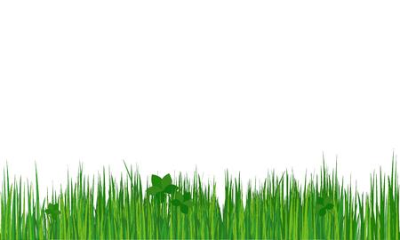 national park: Grass. Summer (spring) background. Vector