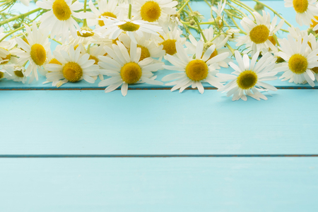 chamomile flower: Spring delicate flowers (daisies) on a blue wooden background. Summer background.