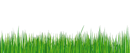 Vector illustration. Spring background - green young grass.