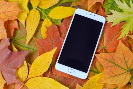 Smartphone on the colorful autumn leaves 写真素材