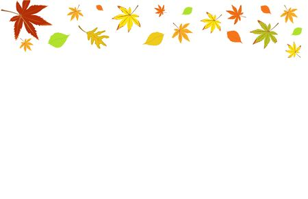colored autumn leaves isolated on white background.