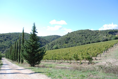Tipycal Tuscan landscape with hills, vineyards, cypresses during the autumn photo