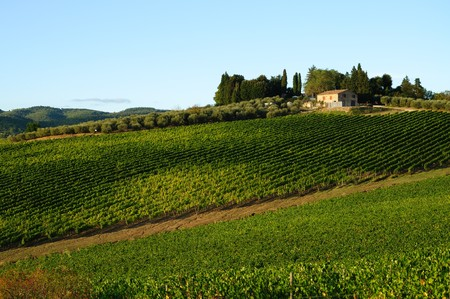 a tipycal tuscan landscape in a beautiful summer day photo